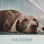 reconnectivehealing-haustiere-final